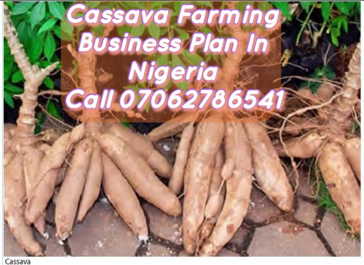 Standard Cassava Processing Business Plan